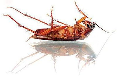 ARMS Pest Management